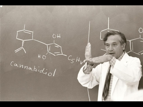 The Scientist (Dr. Raphael Mechoulam)