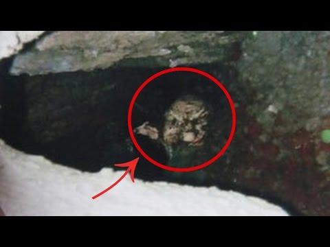 Encuentra Extraña Criatura Humanoide y pasó esto