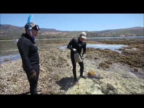 A Scientific Expedition to Timor Leste - Rapid Assessment Program | Conservation International (CI)