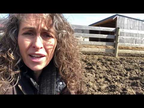 3 fixes for mud in horse paddocks