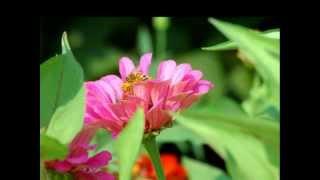 Listen To Free Classical Music - Dome Epais Lakmé (Opera) Classical Music