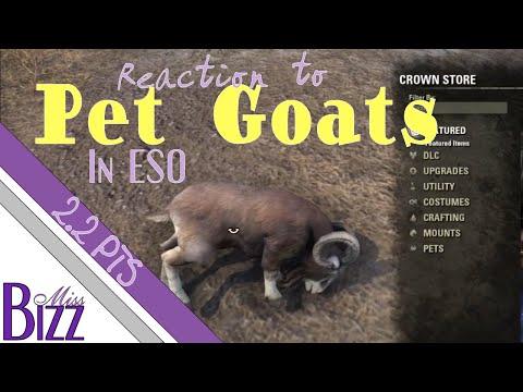 MissBizz's Reaction - Goat Pet - ESO 2.2 PTS Crown Store