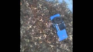 jeep rubicon vs leaves 2