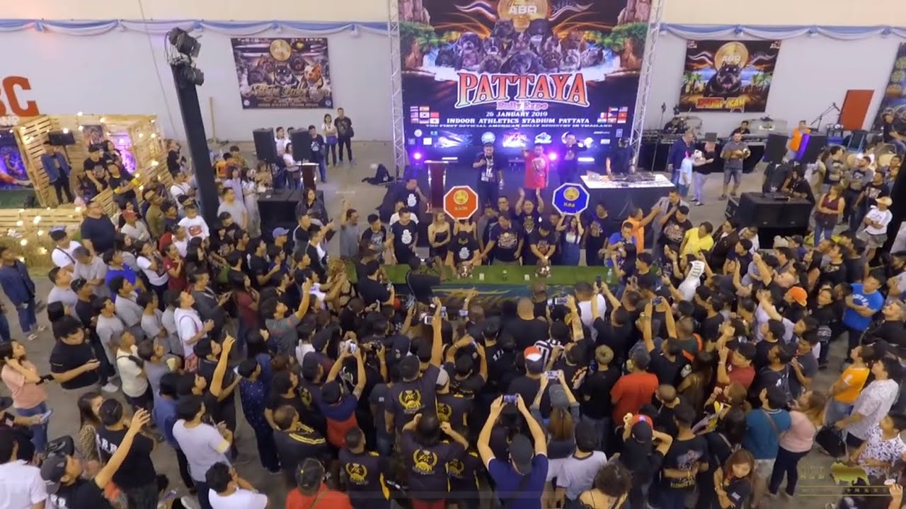AGBtv: ABR Pattaya Bully Expo 2019 (full show recap)