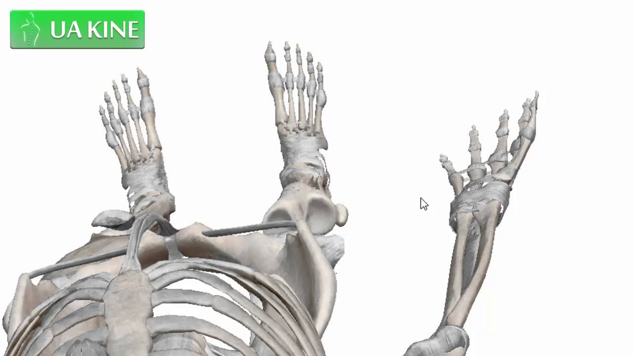 Anatomía de la Tibia - YouTube
