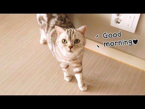 고양이들에게 아침인사를 받았다 -심쿵주의-