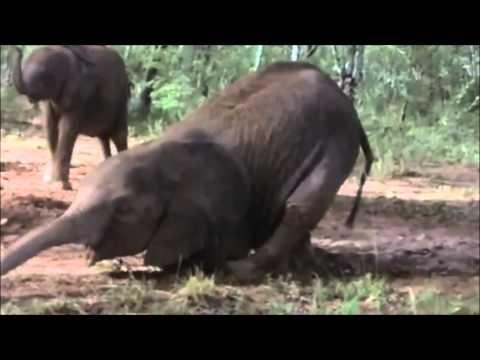 Drunk African Animals