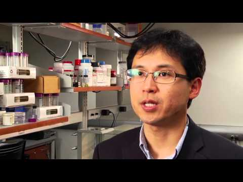 Dye Sensitized Solar Cells for Economically Viable Photovoltaic Systems