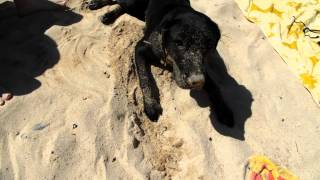hilarious dog in the sand