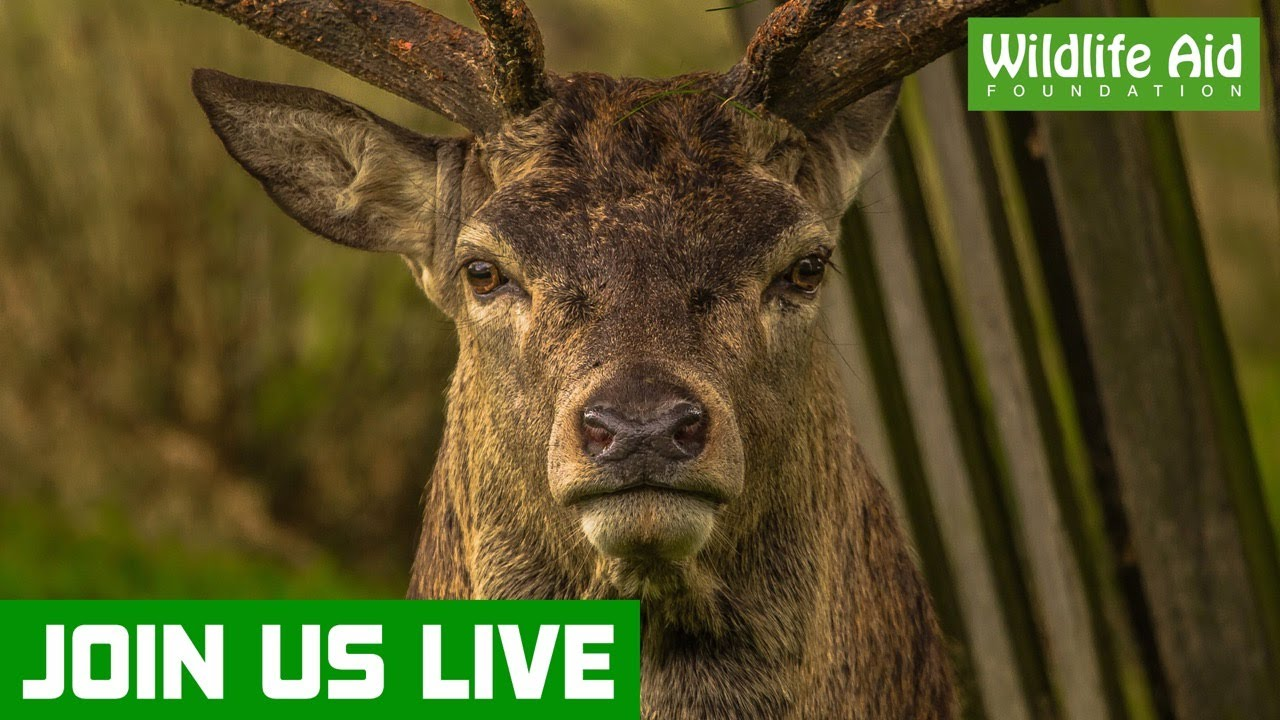 Join us LIVE for a wildlife update
