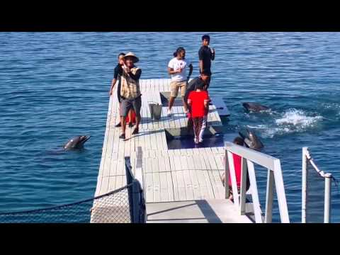 Dolphin Show at Ocean Adventure Subic