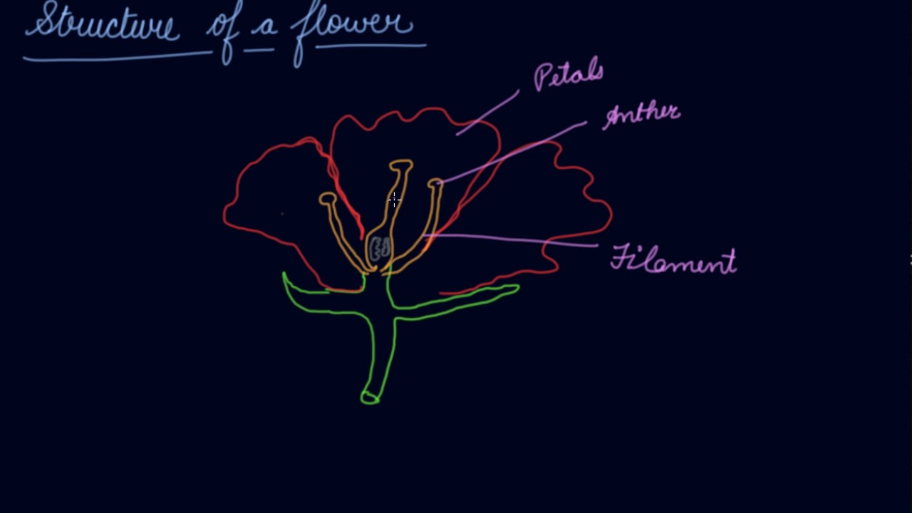 Structure of the flower class 6 biology getting to know plants structure of the flower class 6 biology getting to know plants ccuart Image collections