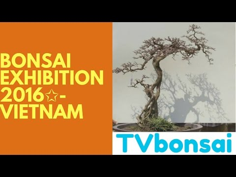 ✩Bonsai exhibition 2016✩- Vietnam- Hanoi city and pohon bonsai
