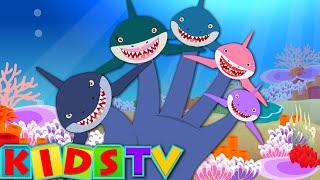 Finger Family Shark | Fish Finger Family | Nursery Rhymes