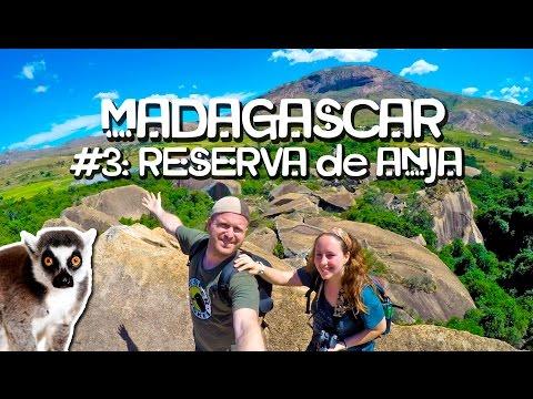 Lémures de la película Madagascar (4/12)