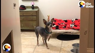 Dog Gets Own Room Under The Stairs | The Dodo