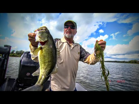How Largemouth Bass Relate to Weed Edges