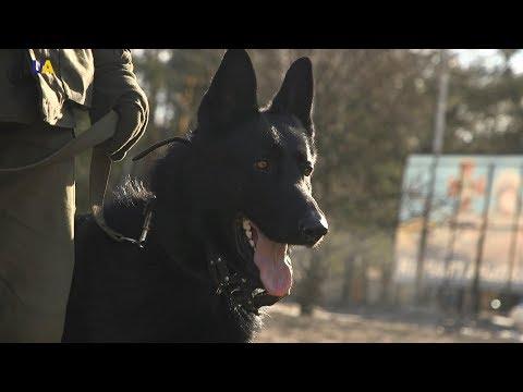 Военная кинология. 5 серия | Полигон