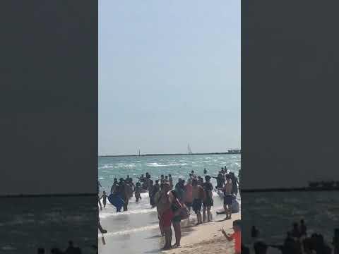 Tiburon En La Playa De Miami