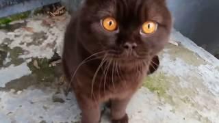 Коты и кошки говорят