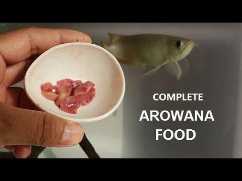 Best Foods For Arowana Fish - I Feed My Arowana!