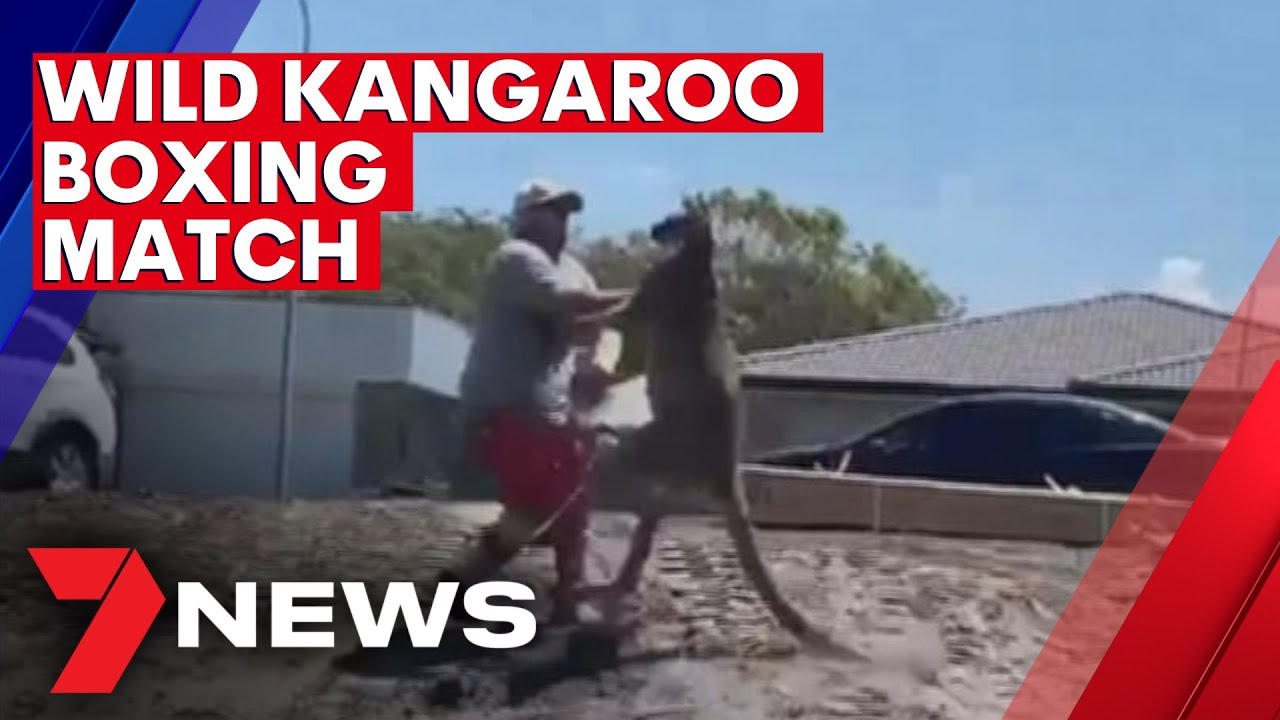 Wild kangaroo punches Sydney father in Christmas Day boxing bash | 7NEWS