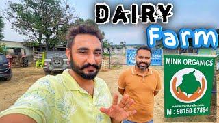sensor walia cows in punjab   …