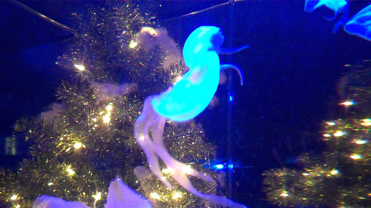 jellyfish ripleys aquarium myrtle beach - Myrtle Beach Christmas Lights