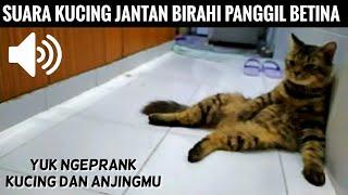 Suara Kucing Jantan Bikin Bingung Kucing Anjingmu