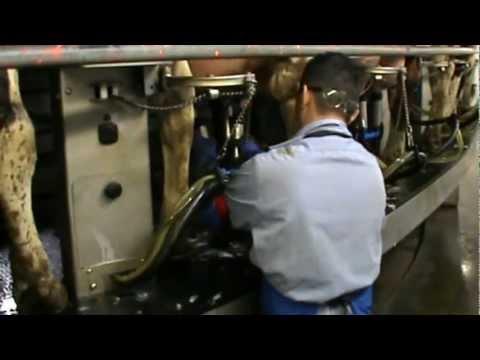American Dairy Farm Staff like EzyCups™
