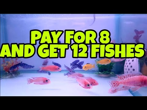 Exotic Fishes | Pay For 8 And Get 12 Fishes | Utekar Fisheries