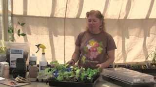 Starting Seeds Indoors: When and How With Terry Allan