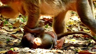 Ah! What mama doing to baby, Why baby naughty until mum do wrong on baby 245