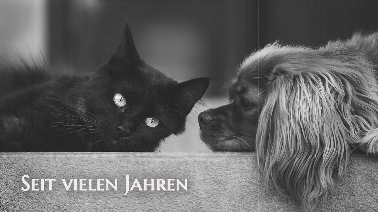 Postkarte Für Dich Danke Für Deine Freundschaft Kurzes Video