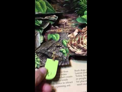 sample national geographic pop up book_2