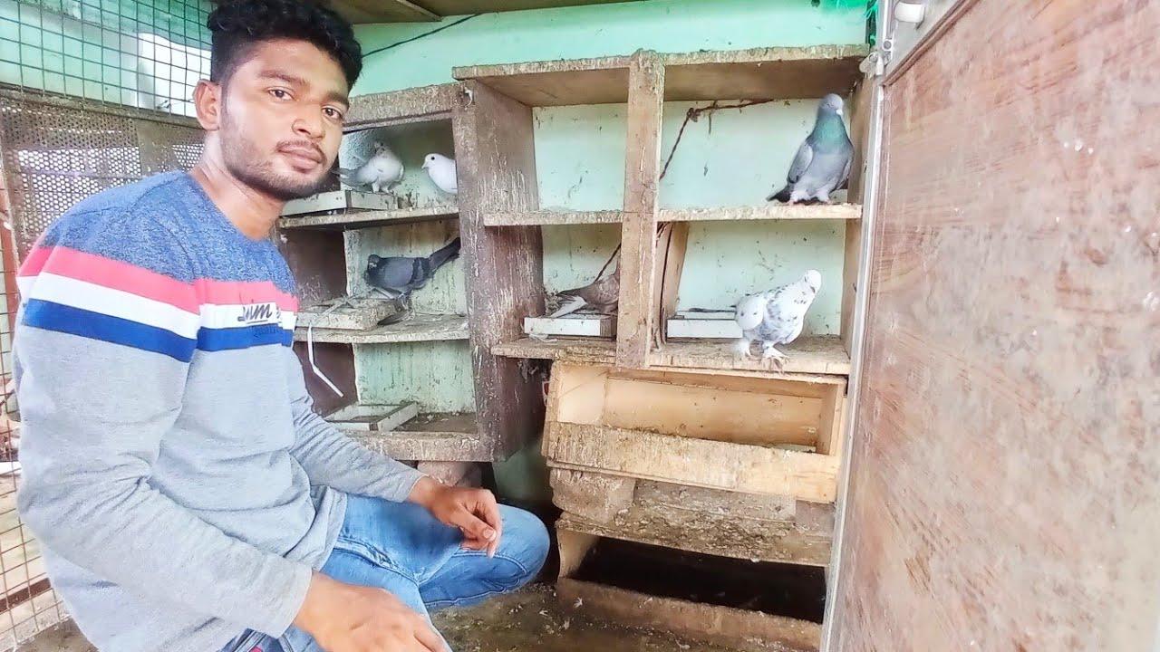 Pigeon in Khandwa    Sharik bhai keh kabootar    high flyer pigeon    high flyer