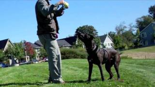 Training With Toys - Impulse Control Games For High Drive Dogs