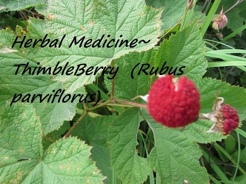 Herbal Medicine For Basic Self Sustainability
