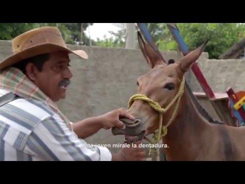 LOS RrOM, El viaje de un errante.