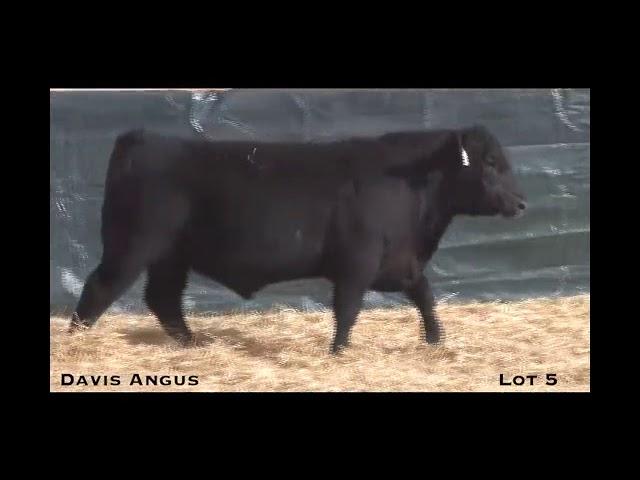 Davis Angus Lot 5