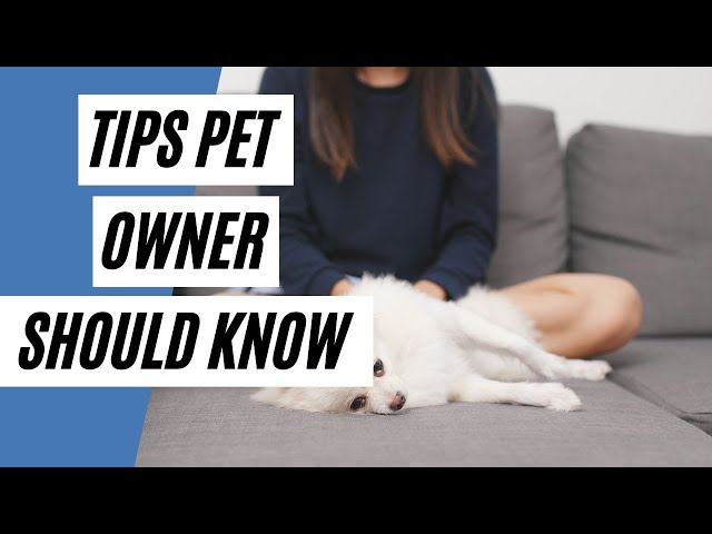 Cleaning Tips Pet Owner Should Know  (Cleaning Hacks)