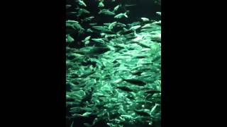 虱目鱼 - 海洋公园