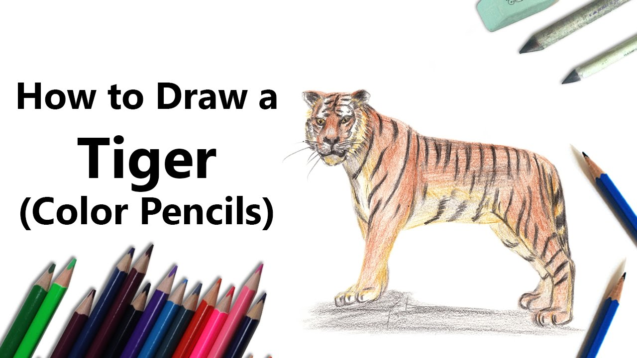 how to draw a tiger with color pencils time lapse youtube