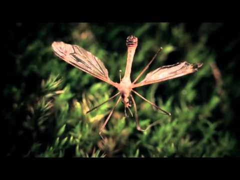 FATES WARNING  Firefly