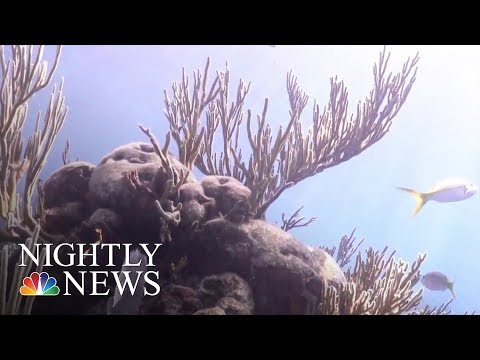 More Than Just Rising Temperatures To Blame For Florida Keys Coral Dying | NBC Nightly News