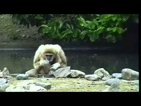 ouwehands-dierenpark-rhenen-(1991)