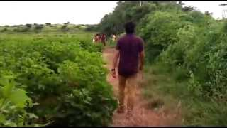 Exclusive video Green Farm in india
