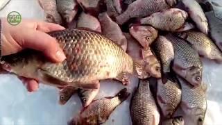 Зимняя Рыбалка в северном Казахстане из Астаны обзор 57 за февраль начало марта