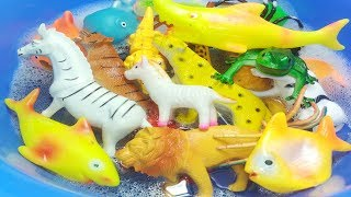 #Learn Wild Animals Names Learn Zoo Wild Animals Names Educational Toys Safari Video For Children