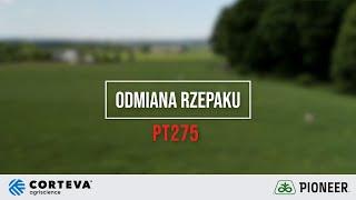 Demo Farma w Rogowie - Ocena odmiany marki Pioneer PT275 rzepaku ozimego